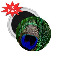 Peacock 2 25  Button Magnet (10 Pack) by Siebenhuehner