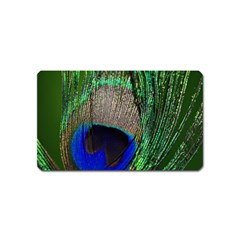Peacock Magnet (name Card) by Siebenhuehner