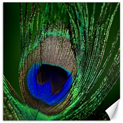 Peacock Canvas 12  X 12  (unframed) by Siebenhuehner