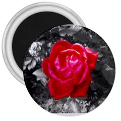Red Rose 3  Button Magnet