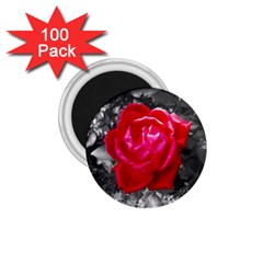 Red Rose 1 75  Button Magnet (100 Pack) by jotodesign