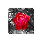 Red Rose Magnet (Square) Front