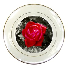 Red Rose Porcelain Display Plate by jotodesign