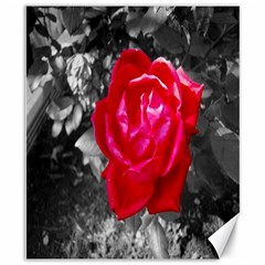 Red Rose Canvas 8  X 10  (unframed)