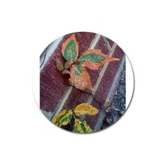 A Leaf In Stages Magnet 3  (round) by WispsofFantasy