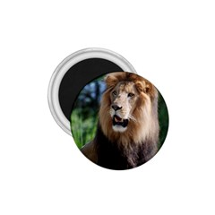 Regal Lion 1 75  Button Magnet by AnimalLover