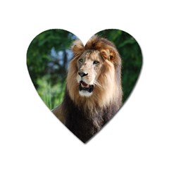 Regal Lion Magnet (heart) by AnimalLover