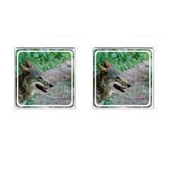 Red Wolf Cufflinks (square) by AnimalLover