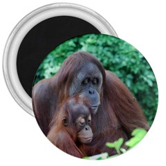 Orangutan Family 3  Button Magnet by AnimalLover
