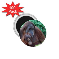 Orangutan Family 1 75  Button Magnet (100 Pack) by AnimalLover