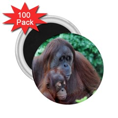 Orangutan Family 2 25  Button Magnet (100 Pack) by AnimalLover