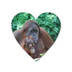 Orangutan Family Magnet (heart) by AnimalLover
