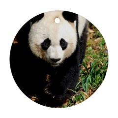 Giant Panda Round Ornament by AnimalLover