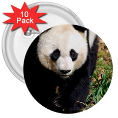 Giant Panda 3  Button (10 Pack) by AnimalLover
