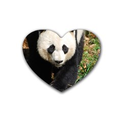 Giant Panda Drink Coasters 4 Pack (heart)  by AnimalLover