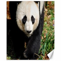 Giant Panda Canvas 11  X 14  (unframed) by AnimalLover