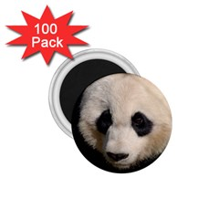 Adorable Panda 1 75  Button Magnet (100 Pack) by AnimalLover