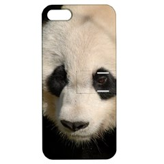 Adorable Panda Apple Iphone 5 Hardshell Case With Stand by AnimalLover