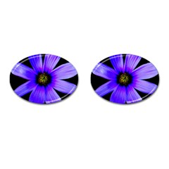 Purple Bloom Cufflinks (oval) by BeachBum