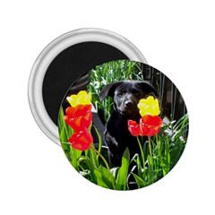 Black Gsd Pup 2 25  Button Magnet by StuffOrSomething