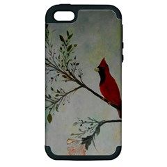 Sweet Red Cardinal Apple Iphone 5 Hardshell Case (pc+silicone)