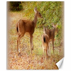 Deer In Nature Canvas 8  X 10  (unframed)