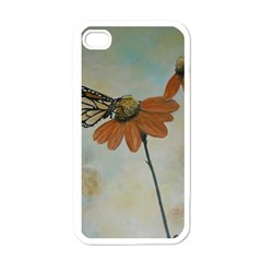 Monarch Apple Iphone 4 Case (white) by rokinronda