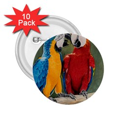 Feathered Friends 2 25  Button (10 Pack)