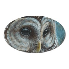 Barred Owl Magnet (oval) by TonyaButcher