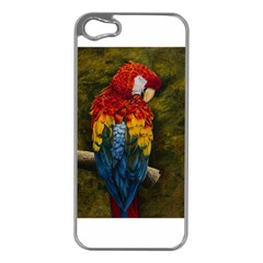 Preening Apple Iphone 5 Case (silver) by TonyaButcher