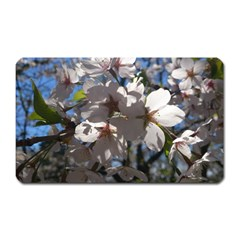Cherry Blossoms Magnet (rectangular) by DmitrysTravels