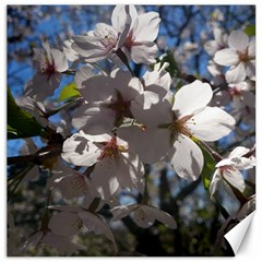Cherry Blossoms Canvas 12  X 12  (unframed) by DmitrysTravels