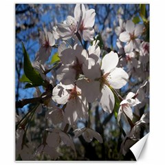 Cherry Blossoms Canvas 20  X 24  (unframed) by DmitrysTravels