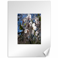 Cherry Blossoms Canvas 36  X 48  (unframed) by DmitrysTravels