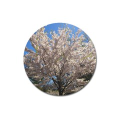 Cherry Blossoms Tree Magnet 3  (round) by DmitrysTravels