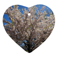 Cherry Blossoms Tree Heart Ornament (two Sides) by DmitrysTravels