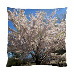 Cherry Blossoms Tree Cushion Case (single Sided)  by DmitrysTravels