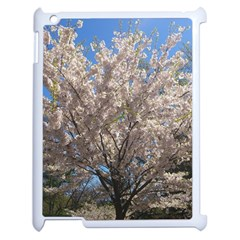 Cherry Blossoms Tree Apple Ipad 2 Case (white) by DmitrysTravels