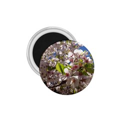 Cherry Blossoms 1 75  Button Magnet by DmitrysTravels