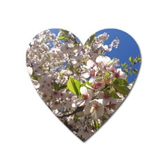 Cherry Blossoms Magnet (heart) by DmitrysTravels