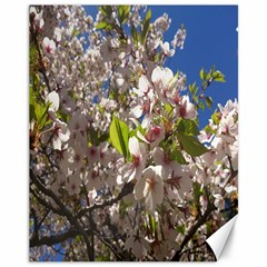 Cherry Blossoms Canvas 11  X 14  (unframed) by DmitrysTravels