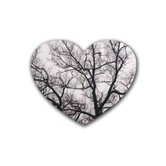 Tree Drink Coasters 4 Pack (heart)  by DmitrysTravels