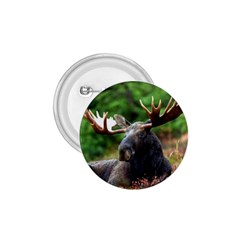 Majestic Moose 1 75  Button by StuffOrSomething