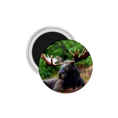 Majestic Moose 1 75  Button Magnet by StuffOrSomething