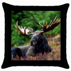 Majestic Moose Black Throw Pillow Case by StuffOrSomething