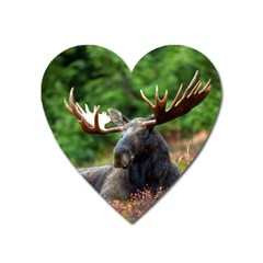 Majestic Moose Magnet (heart) by StuffOrSomething