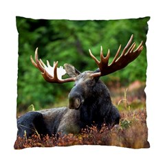 Majestic Moose Cushion Case (two Sided)  by StuffOrSomething