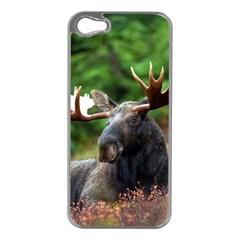 Majestic Moose Apple Iphone 5 Case (silver) by StuffOrSomething