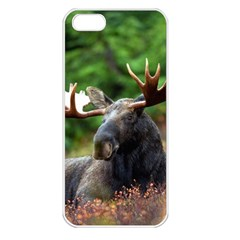 Majestic Moose Apple Iphone 5 Seamless Case (white) by StuffOrSomething