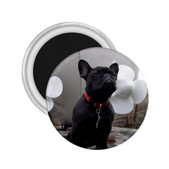 French Bulldog 2 25  Button Magnet by StuffOrSomething
